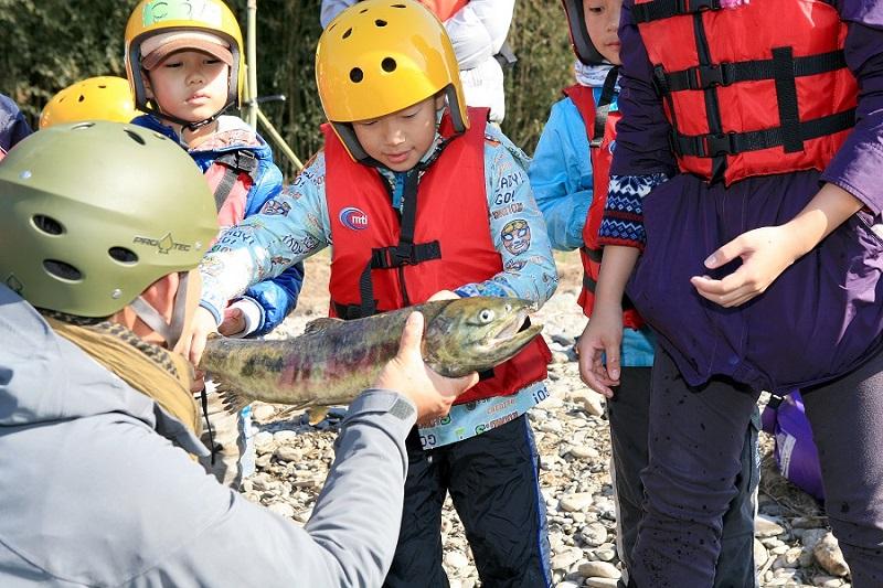 11月恒例イベント・紅葉那珂川とサケ遡上